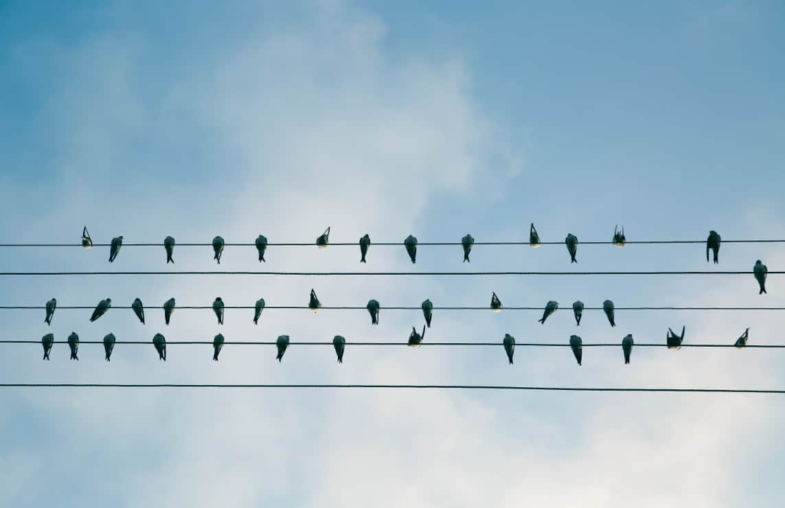 Birds on the Wire and Level 2 Electrician Sydney